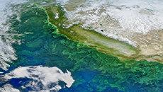 Цветущий планктон, заполнивший Тихий океан кислотой зомби