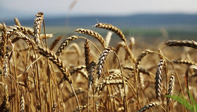Уборка зерновых на Юге России. Архивное фото