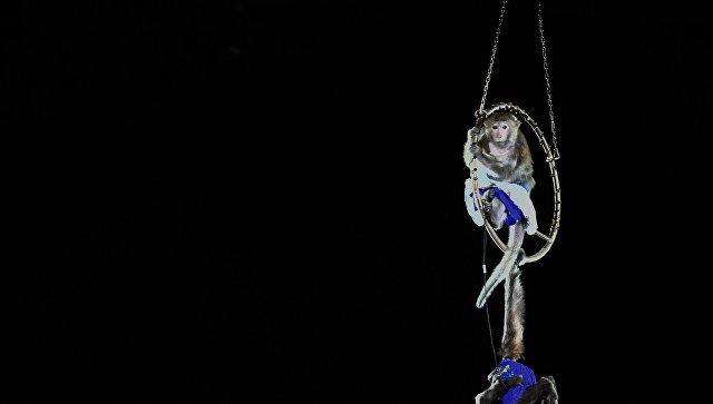 После 146 лет работы цирк братьев Ринглинг закрывается навсегда