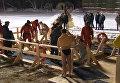 Православные христиане окунались в ледяную купель в ночь на Крещение в Москве