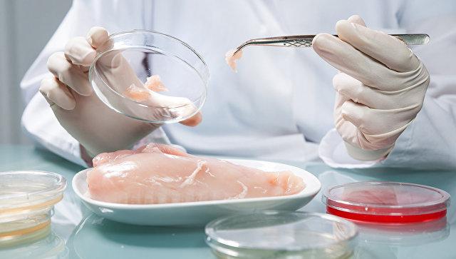 Проверка куриного мяса в лаборатории