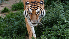 В Татарстане создадут первый в РФ парк кошек в дикой природе