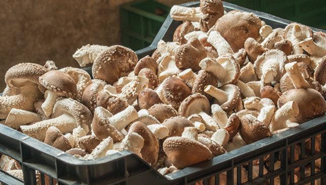ВСмоленской области построят предприятие попереработке грибов имяса