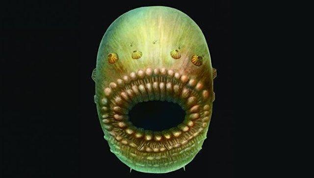 Ученые отыскали предка всех позвоночных— мешок согромным ртом