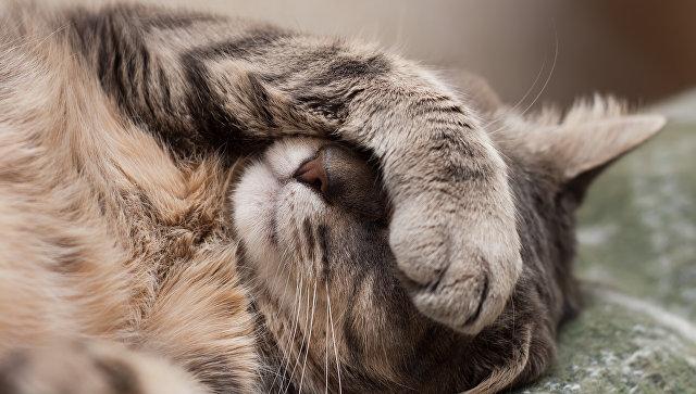 Кошка. Архивное фото