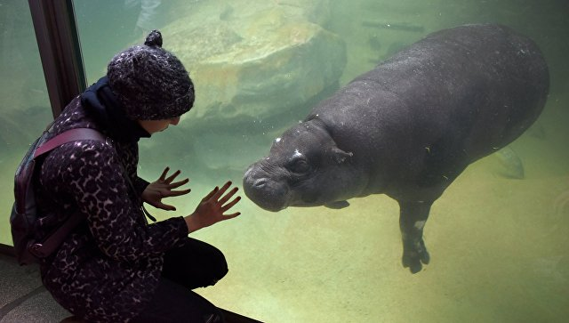 ВМосковском зоопарке впервый раз за40 лет появится бегемот