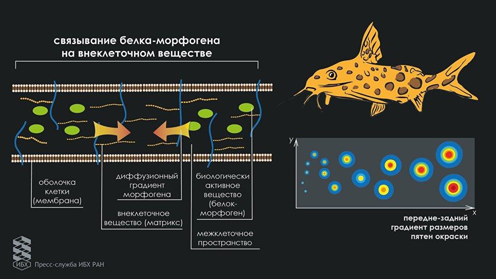 Русские ученые пояснили пятнистость животных математической формулой
