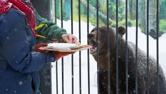 Питомцы зоопарка «Лимпопо» полакомились блинами