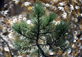 В Томской области высадят около 3,5 млн деревьев в Год экологии