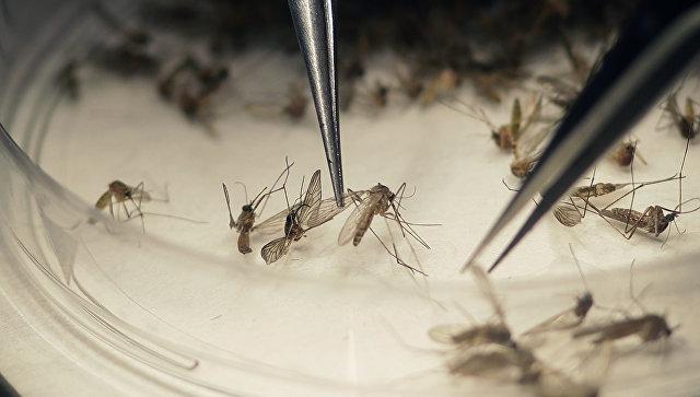 Комары переносчики вируса Зика