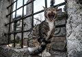 Кошка у мечети Эйюп Султан в Стамбуле