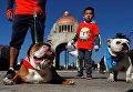 Собаки породы английский бульдог со своими хозяевами во время парада в Мехико