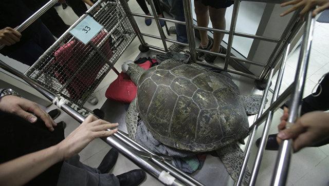 ВБангкоке погибла черепаха, проглотившая 915 монет