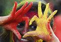 Участница фестиваля Холи в Калькутте, Индия