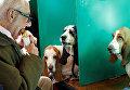 На выставке собак Crufts в Бирмингеме