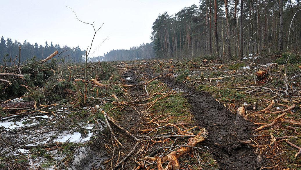 Ущерб от незаконного природопользования ежегодно достигает триллиона рублей