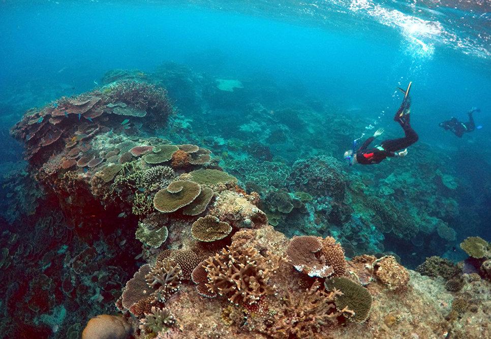 Питер Гаш, владелец и управляющий Lady Elliot Island Eco Resort, во время осмотра Большого Барьерного рифа