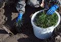 Военные лесники посадят в Год экологии 4,6 миллиона деревьев