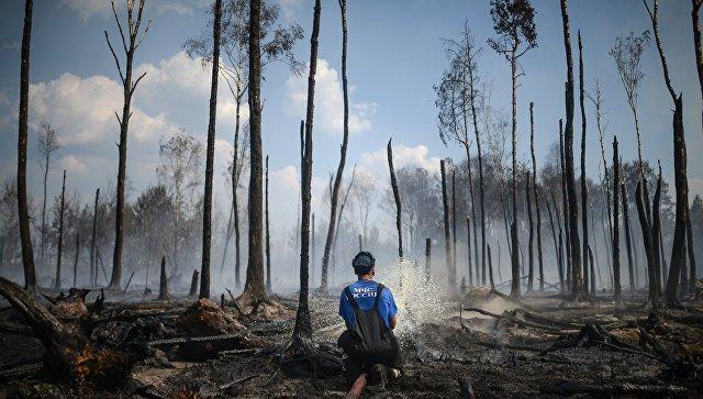 """МГУ: """"наступление"""" лесов на торфяники ускорит глобальное потепление"""