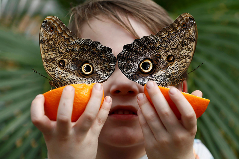Ежегодная выставка экзотических бабочек Sensational Butterflies в музее естественной истории в Лондоне