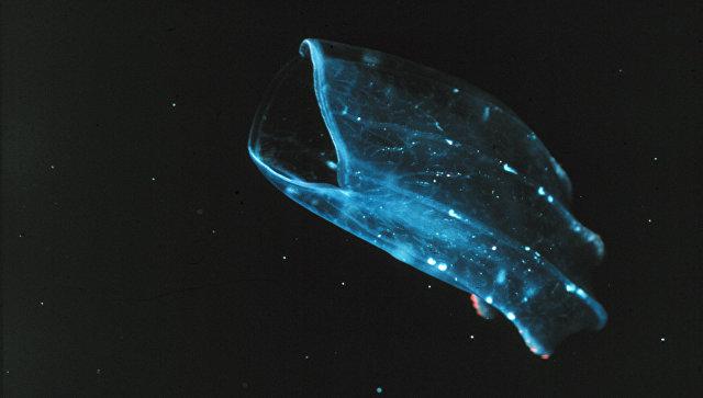 Ученые впервые показали, как выглядели первые животные наЗемле