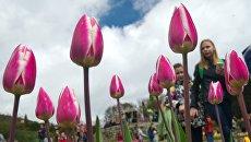 Тюльпаны на выставке. Архивное фото