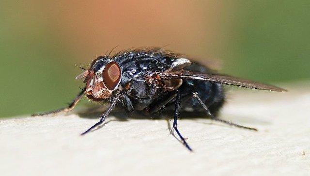 Вличинках мух найдены полезные молекулы— Ученые