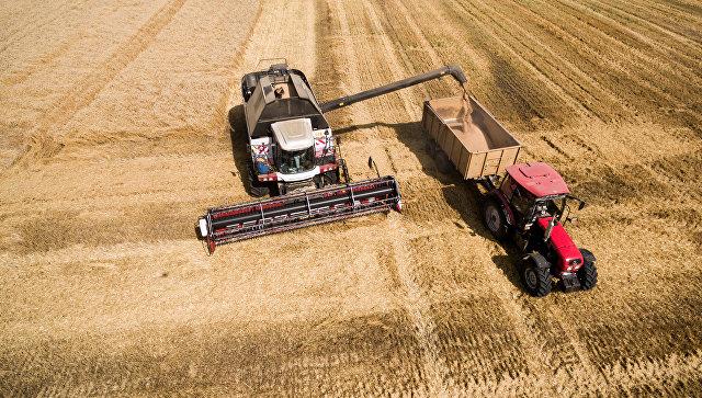 Дворкович ждет увеличения экспорта пшеницы после отмены ограничений Турции