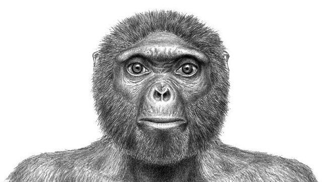 Предки людей могли появиться наБалканах— Палеонтологи