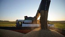 Уборка урожая пшеницы. Архивное фото