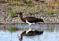 В Байкало-Ленском заповеднике водится 260 видов птиц