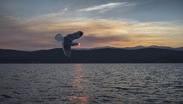 Ушканьи острова на озере Байкал, архивное фото