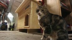 Кот возле нового дома в подвале Эрмитажа. Архивное фото
