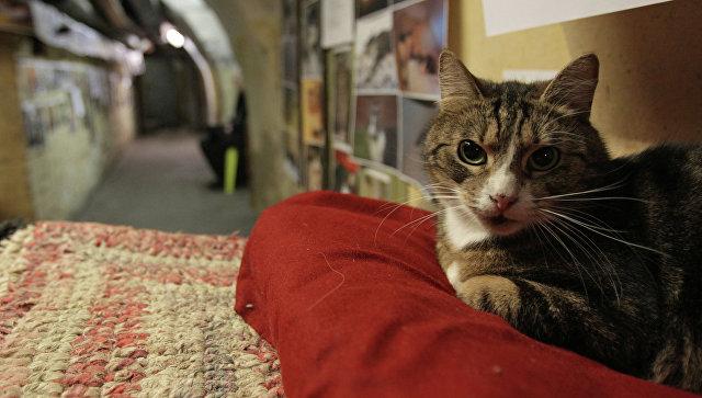 Кот в подвале Эрмитажа. Архивное фото
