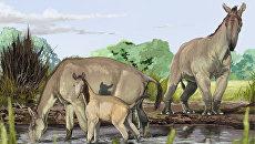 Так художник представил себе макраухений, доисторических загадок Дарвина из Южной Америки