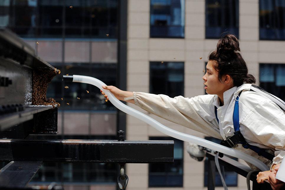 Пчеловод выгоняет рой пчел из дома на Таймс-сквер