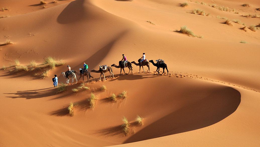 """Ученые заявили, что Сахара может полностью """"позеленеть"""" через столетие"""