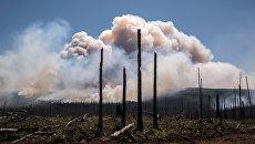 Последствия лесных природных пожаров. Архивное фото