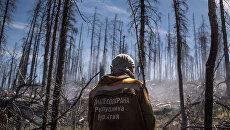После пожара в лесу. Архивное фото