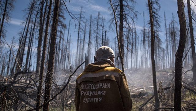 Лесные пожары. Архивное фото