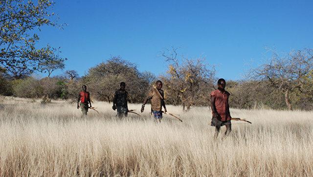 Ученые: Мужской контрацептив будет создан наоснове яда для стрел африканских охотников