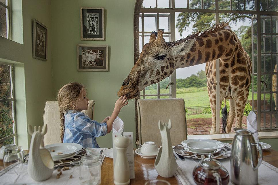 Работа фотографа Ирины Остроуховой Завтрак с жирафом, занявшая первое место в категории Детская фотография. Профессионалы  на ежегодном фотоконкурсе компании Nikon Я | В СЕРДЦЕ ИЗОБРАЖЕНИЯ