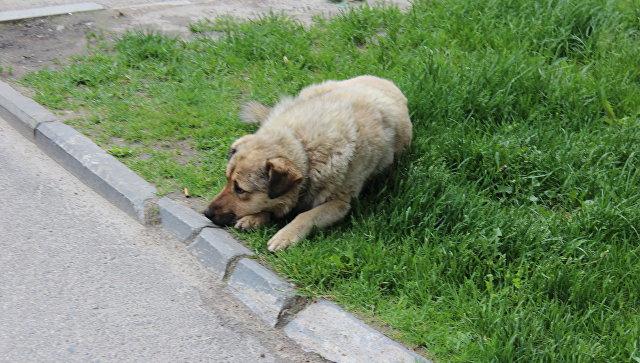 ВЗабайкалье под суд пойдет мужчина, заставлявший родных красть иесть собак