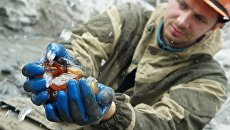 Добыча янтаря в карьере АО Янтарный комбинат в Калининграде.