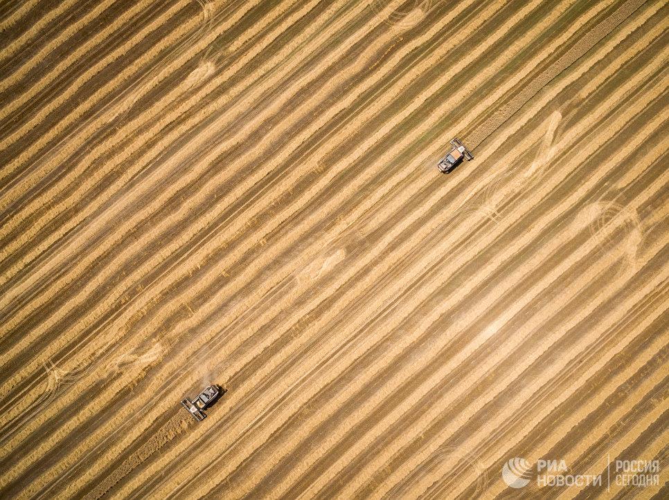 Уборка пшеницы на полях АО Агрокомплекс в Краснодарском крае
