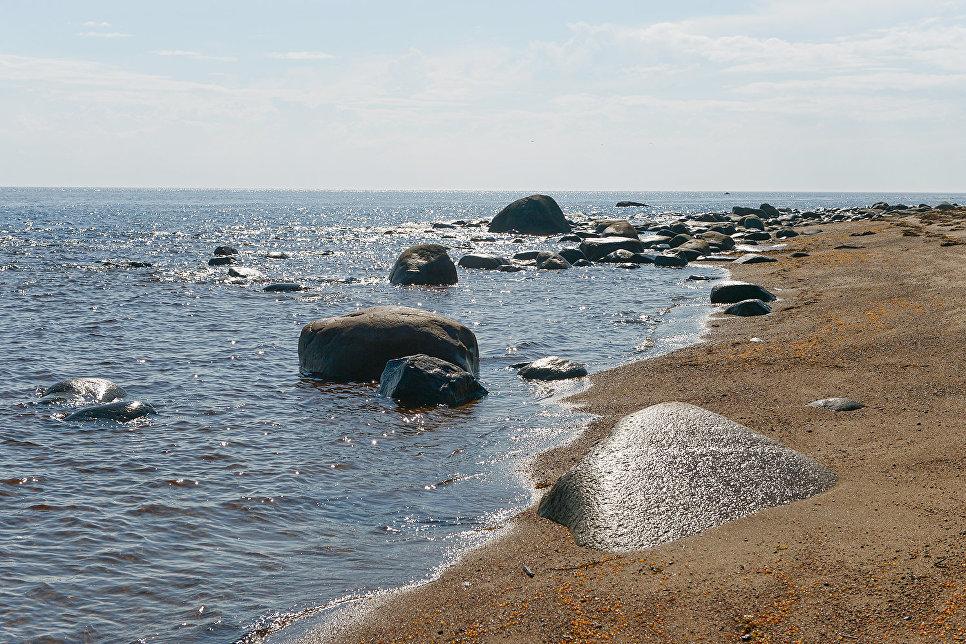 В различных заливах Белого моря формируются разные биологические условия, которые, например, способствуют появлению здесь нескольких видов сельди