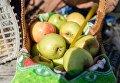 Яблоки, освященные во время богослужения в честь праздника Преображения Господня в соборе Воздвижения Креста Господня в Омске. 19 августа 2017