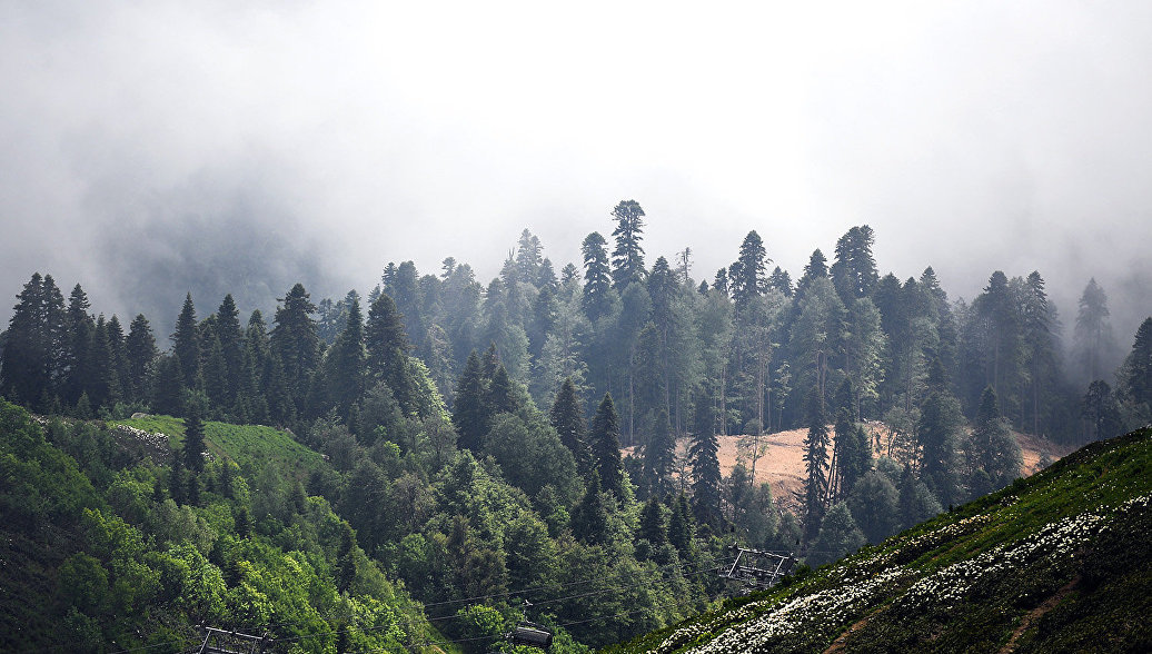 ГенпрокуратуруРФ просят проверить вырубку леса вНацпарке Сочи