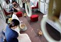 Пассажиры играют с котятами в котопоезде в городе Огаки, Гифу, Япония. 10 сентября 2017