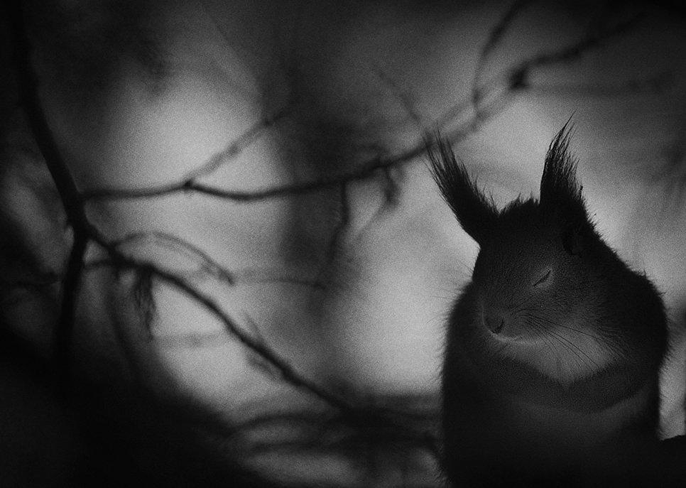 Работа фотографа из Швеции Mats Andersson Winter pause в категории Черное и белое в финале конкурса Wildlife Photographer of the Year 2017